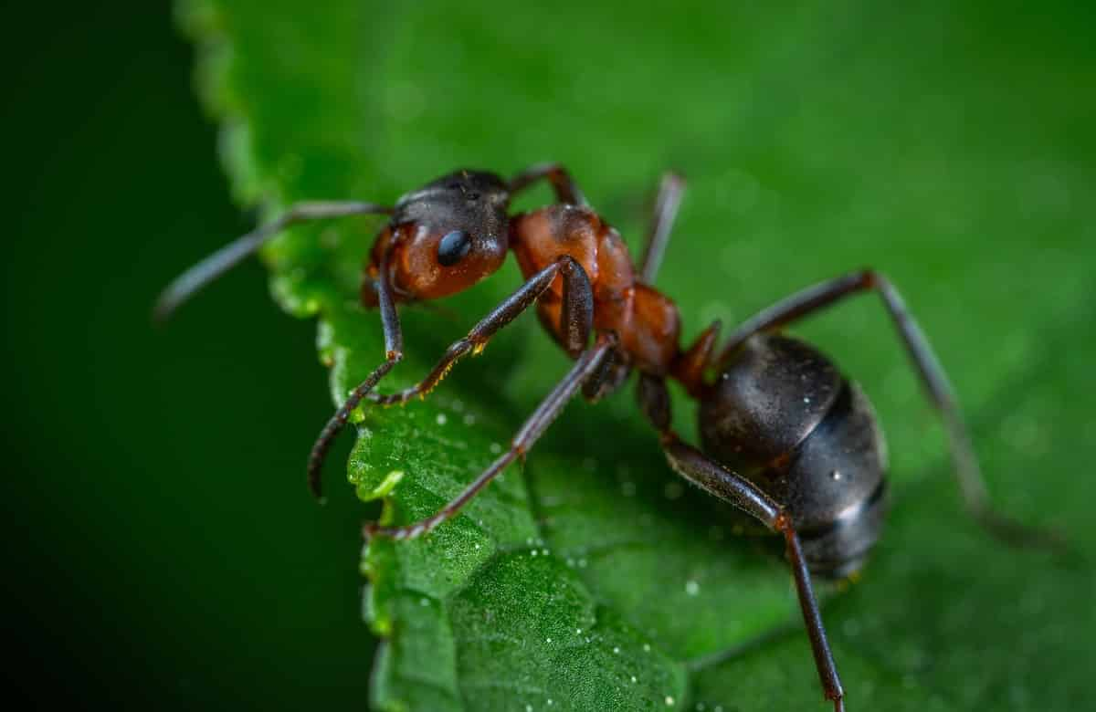 ant killer traps
