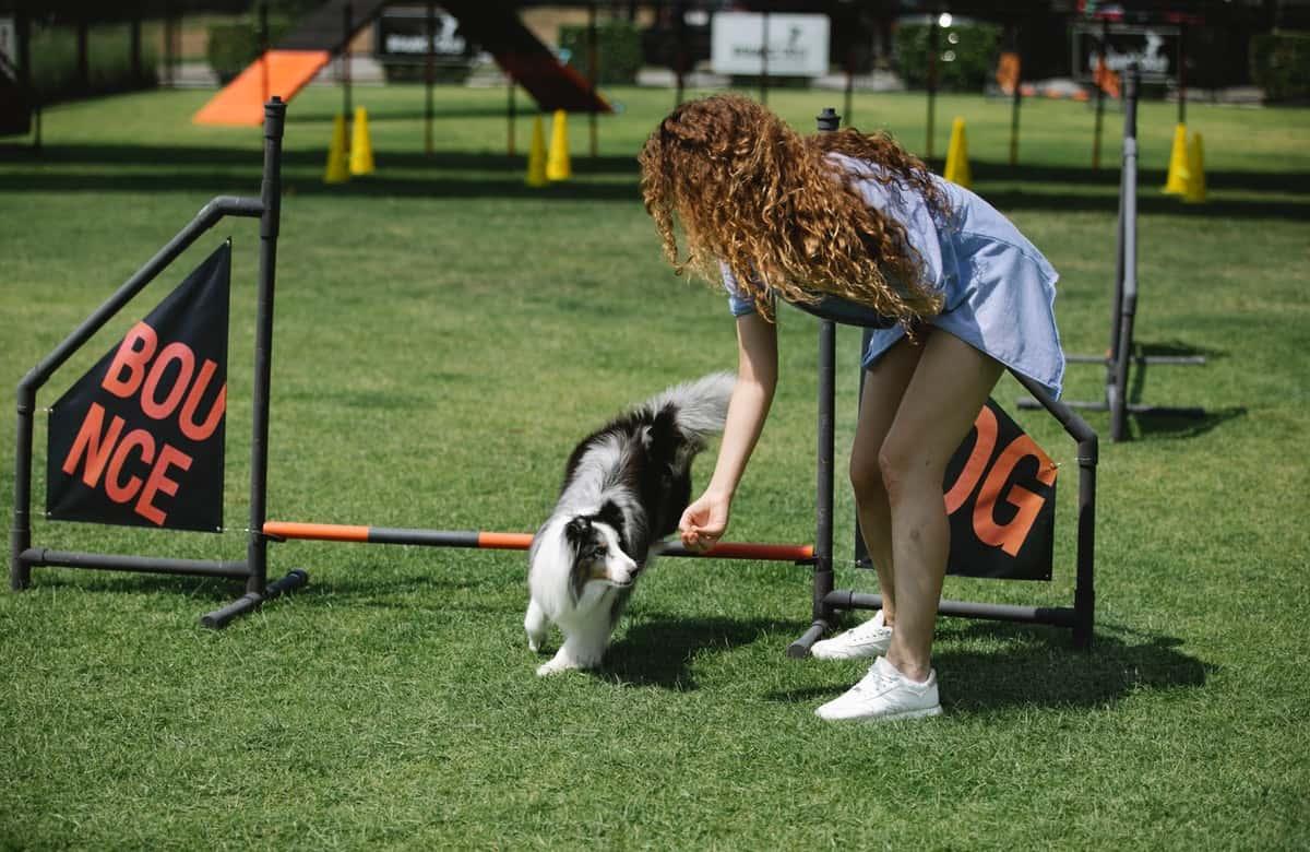 Best Online Dog Training Programs